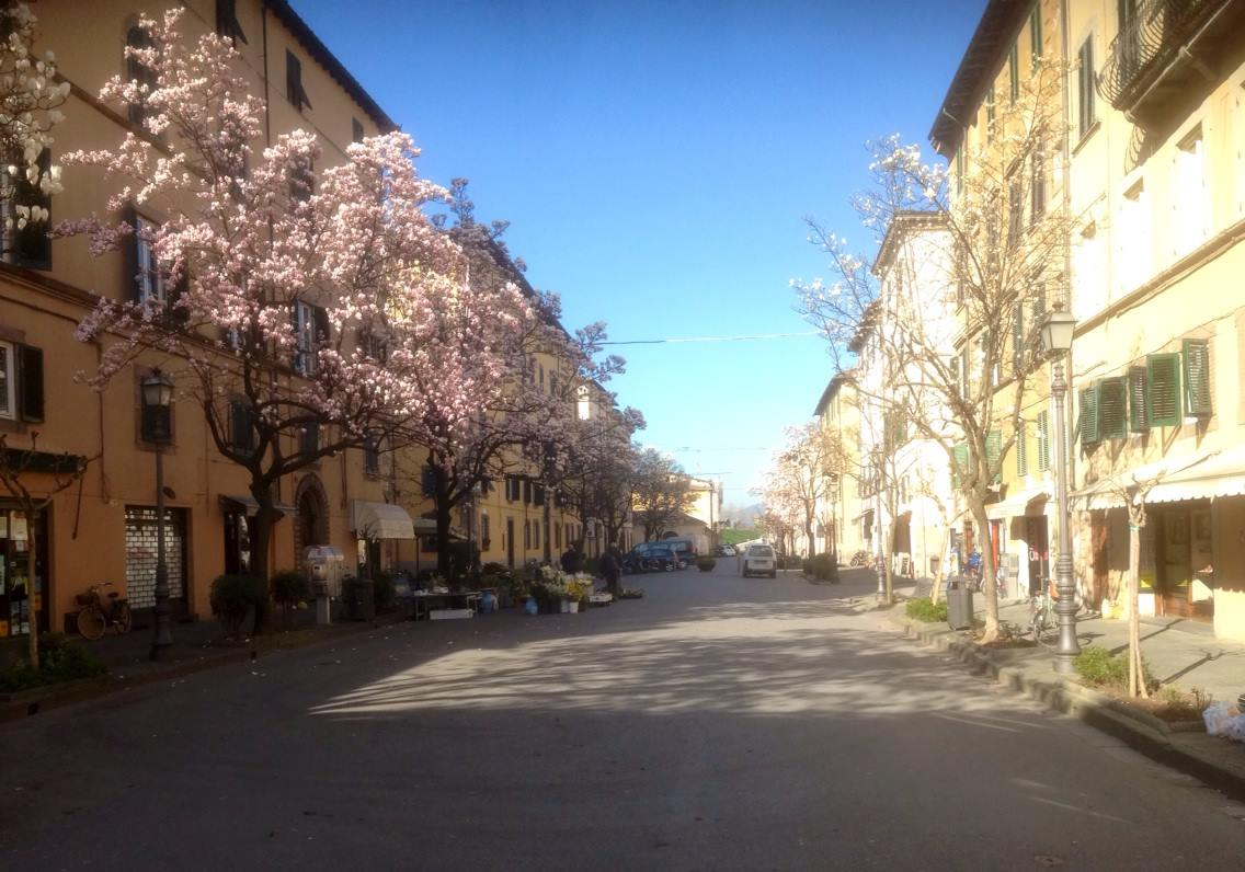 Lucca, city of Camelie