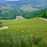 Chianti_landscape